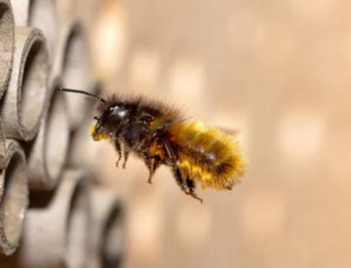 Bienenretter: Herbstaktion für Grundschulen gestartet